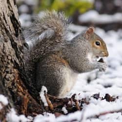 Squirrels Dangerous Or Just Cute