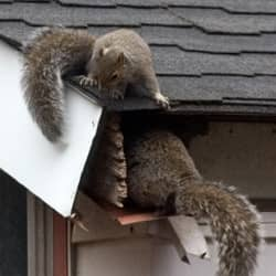 Wildlife Causing Problems In Southern Maine