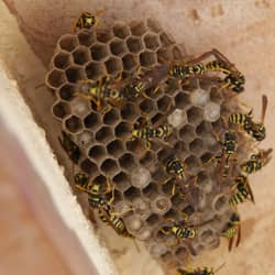 Wasp Nests In The Winter