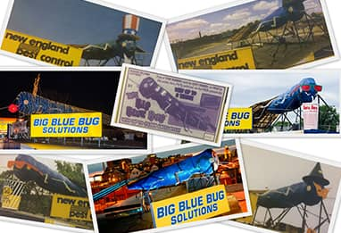 collage of big blue bug pictures